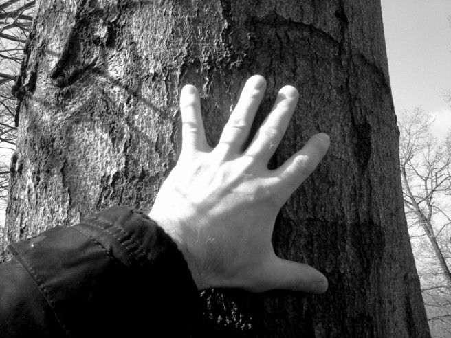 my hand heals the tree with supernatural healing power